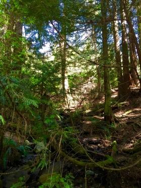 Christine Fichtner Quarry Rock hike